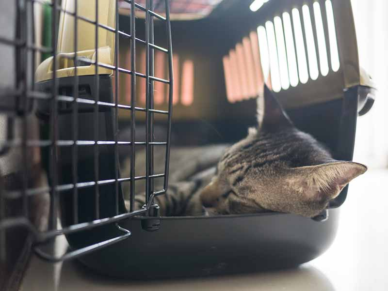 Crate training your cat can help get your cat to the vet