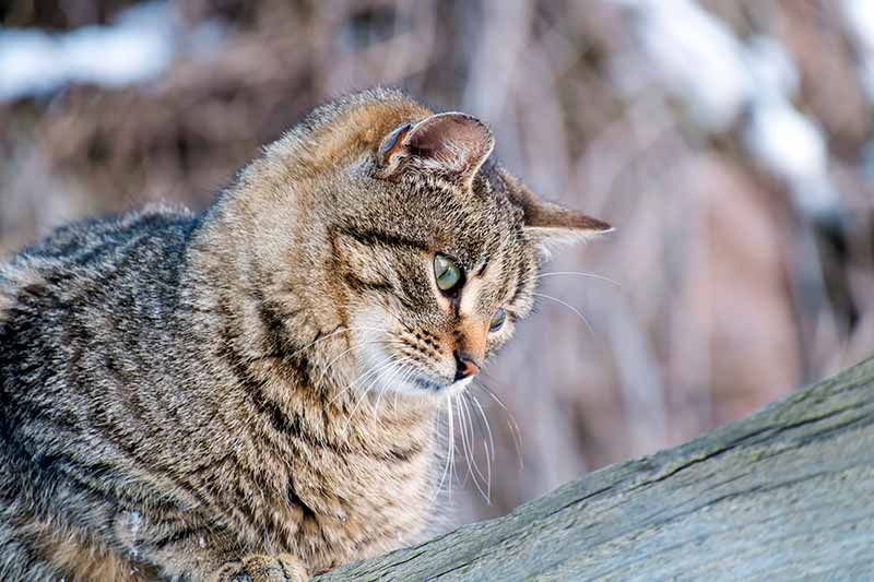Cat parasite prevention is a year-round commitment to pet health
