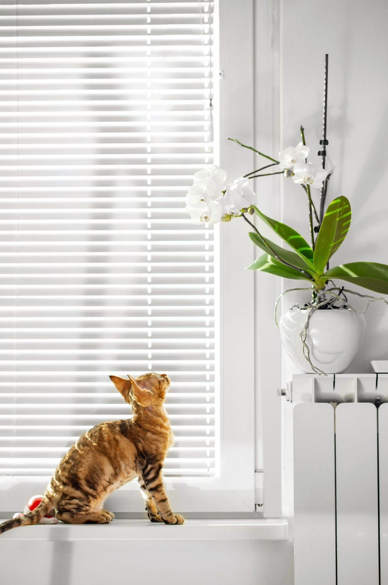 A cat looks at a houseplant.